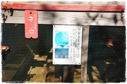 鎌倉2日目①DSC01695