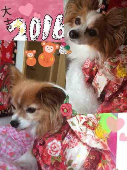 fc2blog_2016010119295870e.jpg