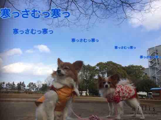 fc2blog_20160119203238ce8.jpg