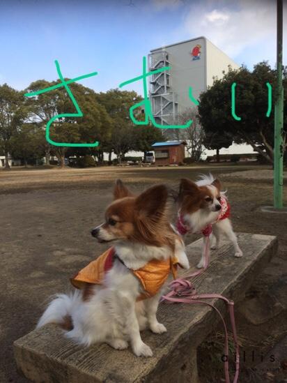 fc2blog_2016011920364926e.jpg