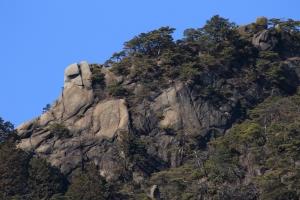 岩肌に樹がまとわりついています
