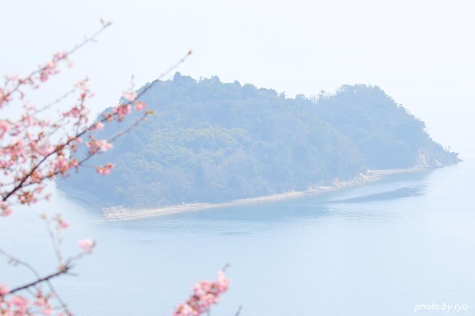河津桜とメジロちゃん♪_1