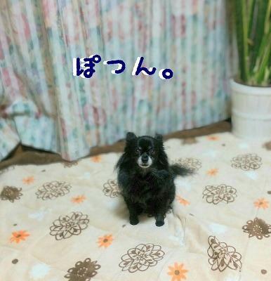 2015-12-11_14_40129.jpg