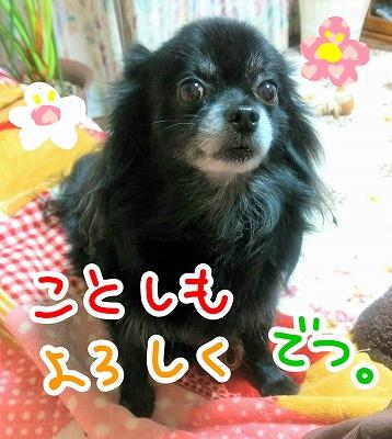 2016-01-02_21_41545.jpg