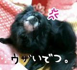 2016-01-11_20_41971.jpg