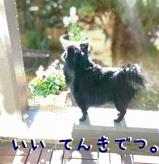 2016-01-13_22_42047.jpg