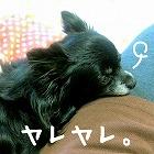 2016-01-23_15_42522.jpg