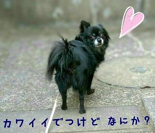2016-01-27_21_42614.jpg