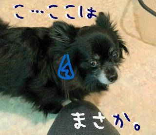2016-02-14_14_43704.jpg
