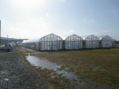 【写真】春の嵐が去った後の農園の様子