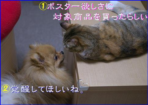 blog20151217-3.jpg