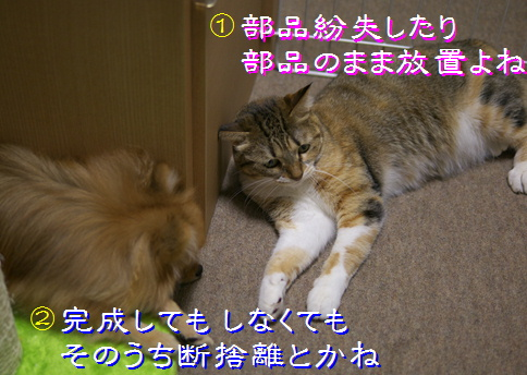 blog20151219-3.jpg