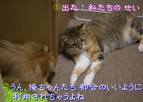 blog20151219-4.jpg