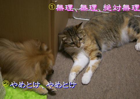 blog20151219-5.jpg
