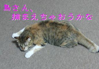 blog20151220-6.jpg