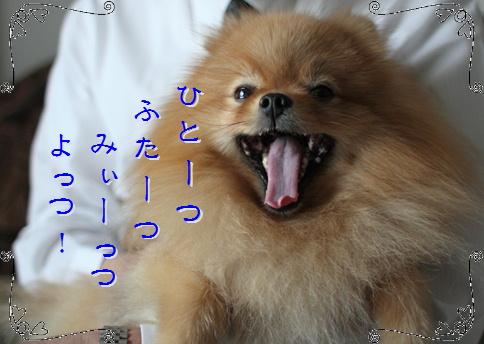 blog20160101-3.jpg