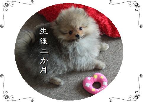 blog20160101-5b.jpg