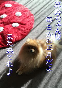 blog20160110-5.jpg
