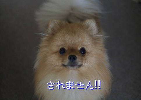 blogsw4a.jpg
