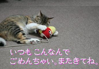 blogsw5.jpg