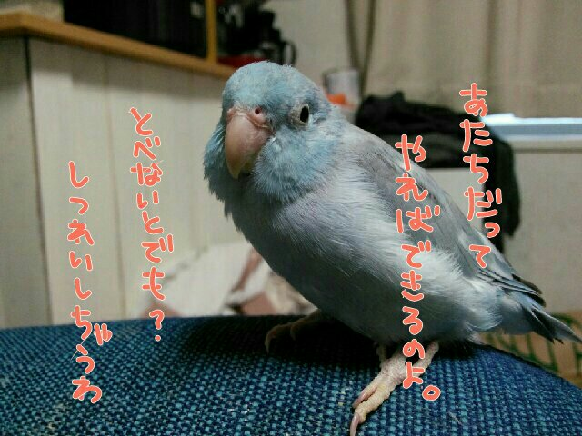 PicsPlay_1451300585318.jpg
