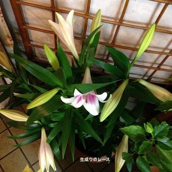 IMG_1480-3.jpg