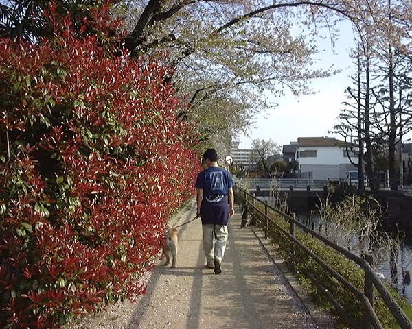 若かりし父と散歩中