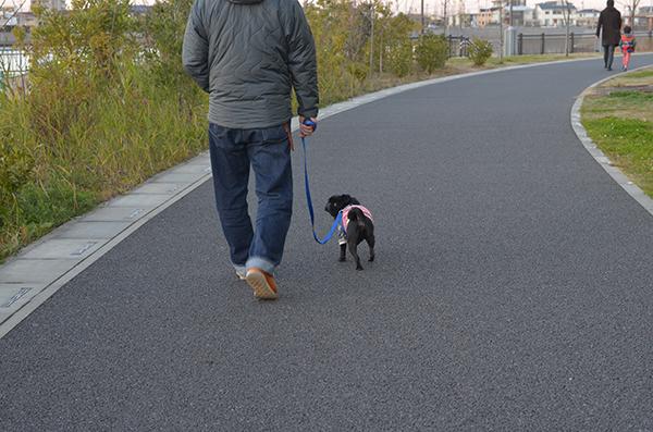 湖畔の遊歩道散歩納め