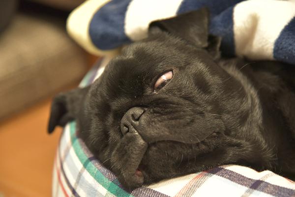 疲れたぶー