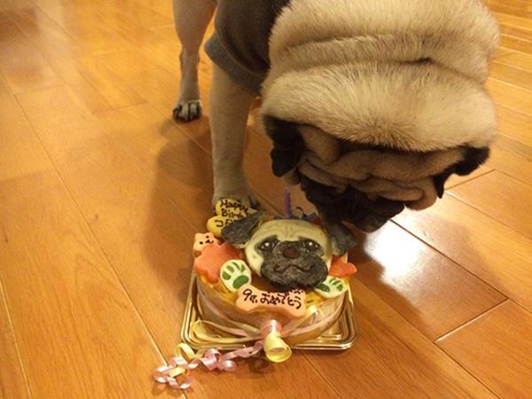 こたろケーキ♡