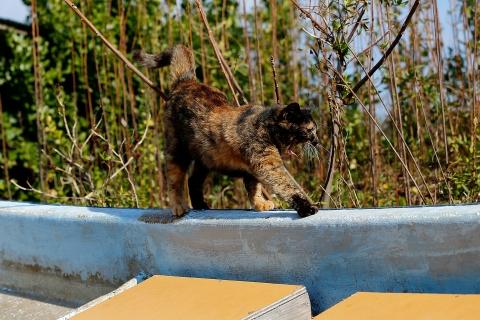 さび猫と舟