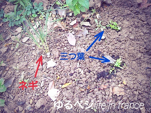 15-12-03-14-24-42-984_deco.jpg