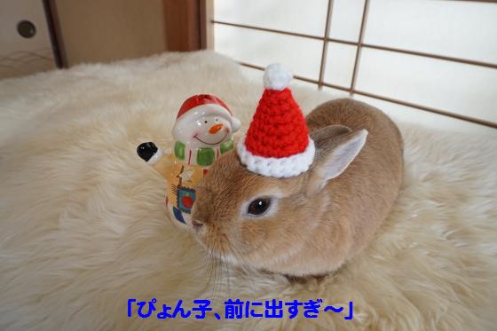 ぴょん子151212_01