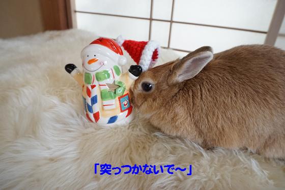 ぴょん子151212_09