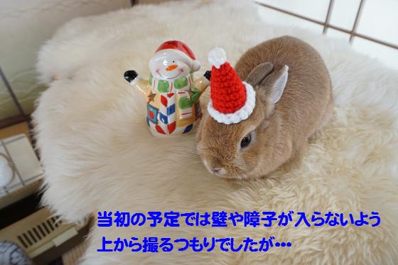 ぴょん子151212_10