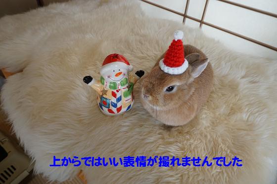 ぴょん子151212_11