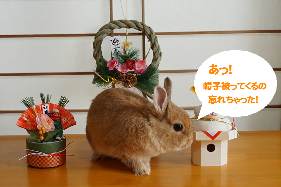 ぴょん子151218_01