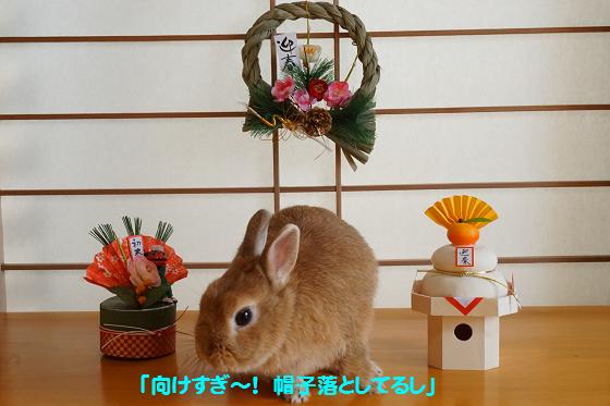 ぴょん子151218_02