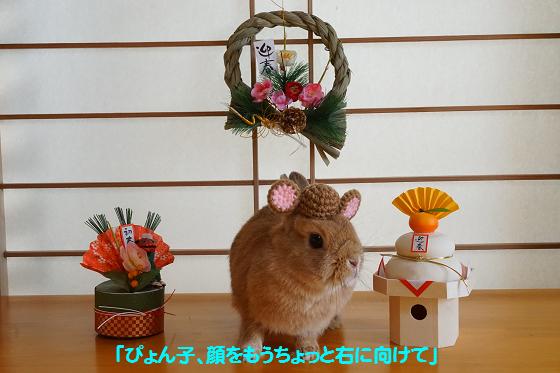 ぴょん子151218_03