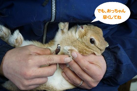 ぴょん子160113_02