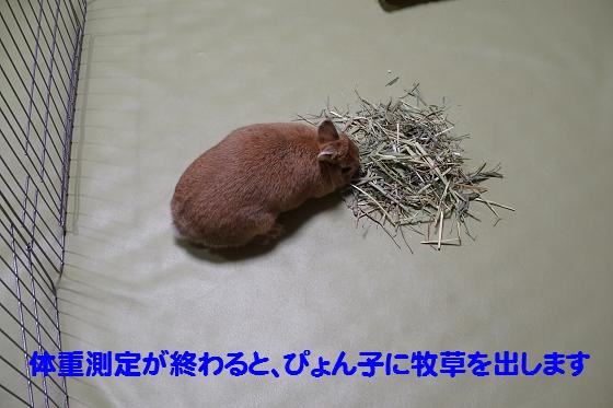 ぴょん子160203_06