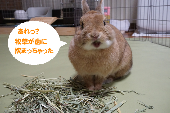 ぴょん子160203_09
