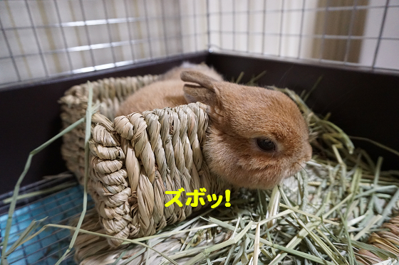 ぴょん子160202_01