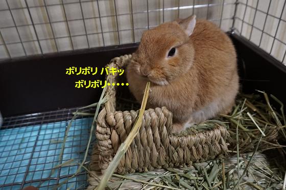 ぴょん子160202_04