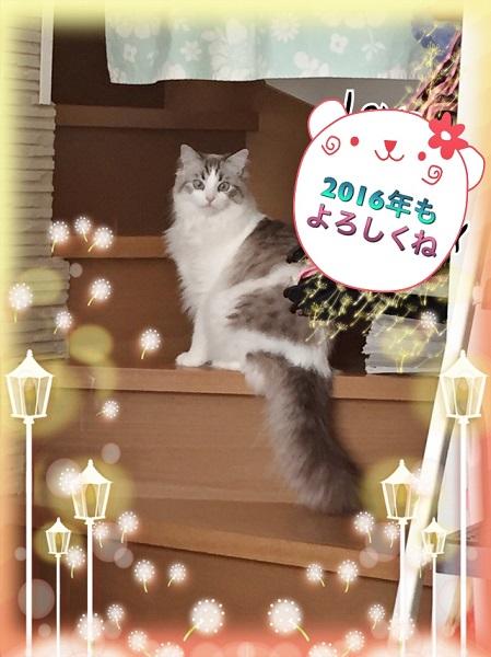 Image10.jpg