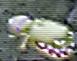 コアクマンワルキューレの冒険 根かじり虫