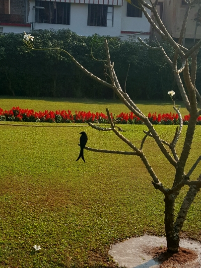 Odisha_15.jpg