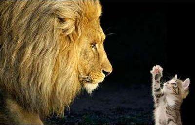 猫VSライオン