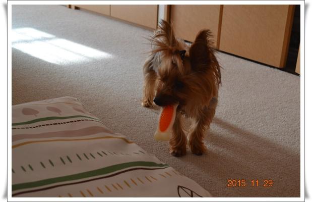 あたしいおもちゃですDSC_0388-20151129