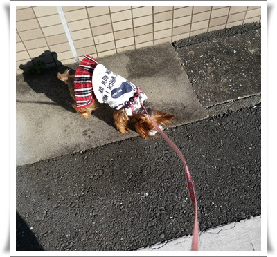 散歩IMG00404-20151201